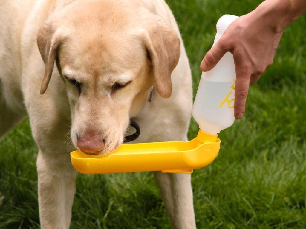 Почему собакам нельзя давать шоколад 192