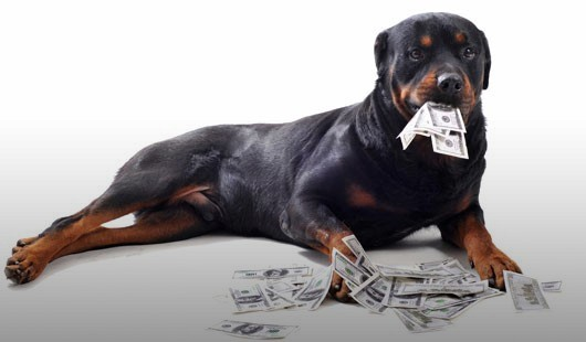 собака в кредит