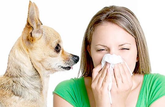 аллергия собаки