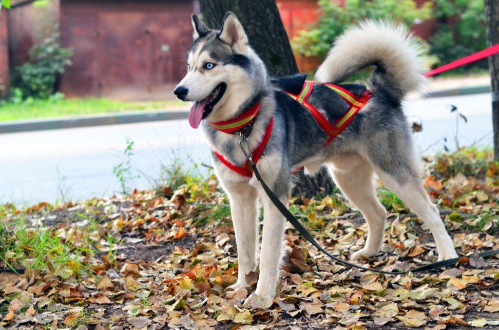 Шлейка для собак купить