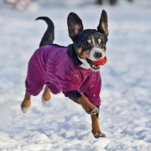 Купить одежду для собак