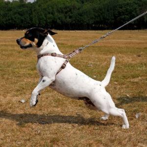 Купить поводок для собаки