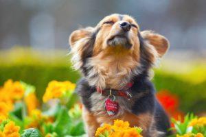 Как купить ошейник для собаки