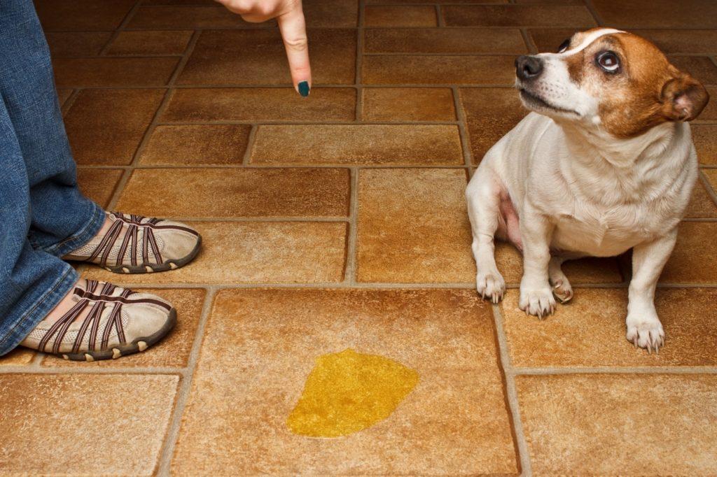 anti pet spray