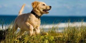Электронный ошейник для дрессировки собак купить