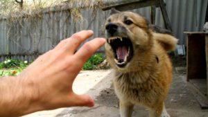 Симптомы бешенства у человека после укуса собаки