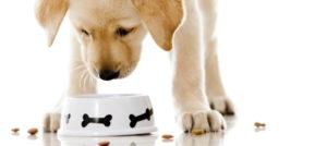 Чем кормить щенка