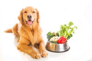 Купить корм роял канин для собак