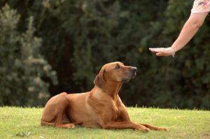 Дрессировка собак видео