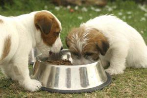 Грандорф корм для собак купить