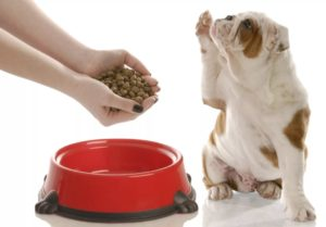Сухой корм для собак