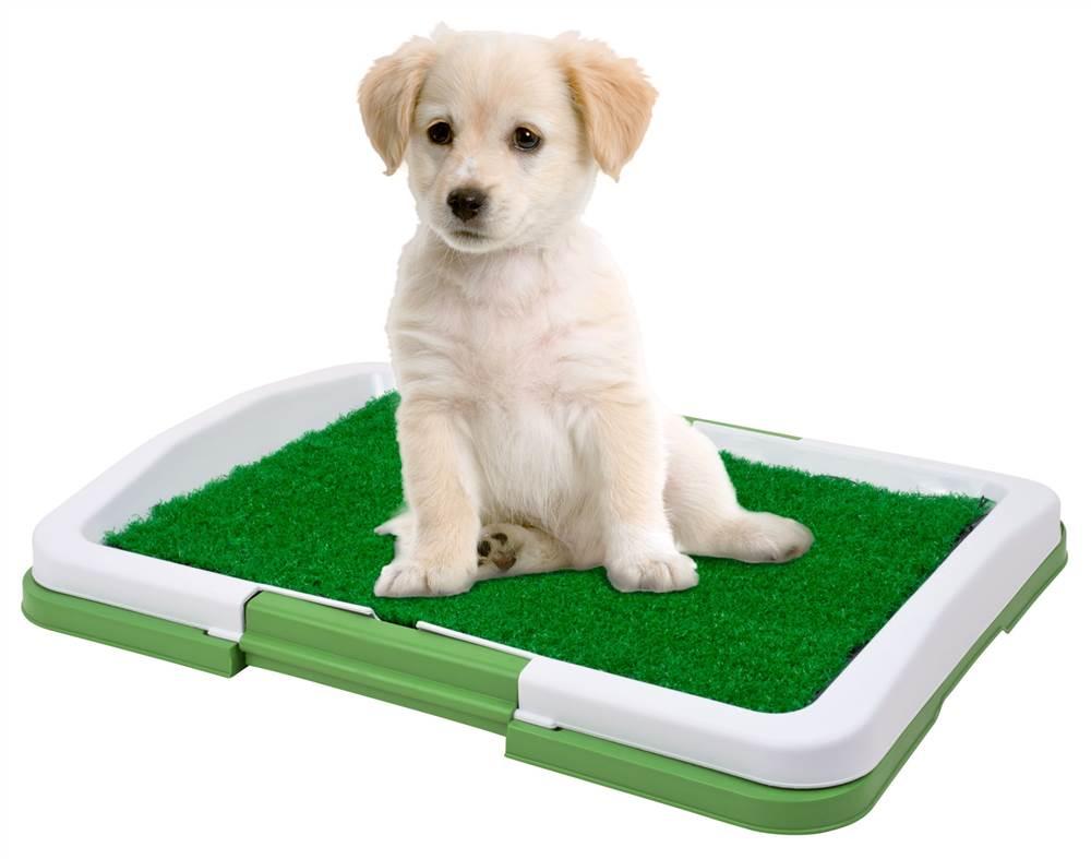 Лоток для собак мелких пород купить
