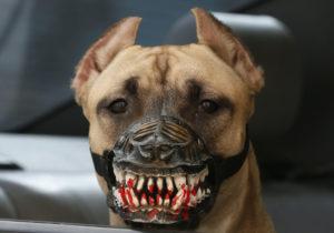 Купить намордник для собаки
